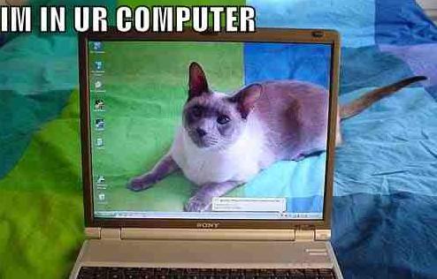 Katze im Computer