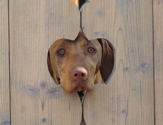 positiverdenken.de Hund im Gartenzaun